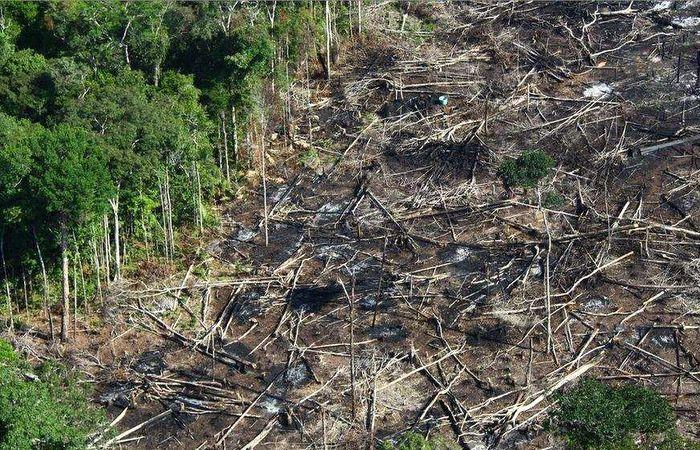 """Resultado de imagem para MT passa acompanhar desmatamento em """"tempo real"""""""